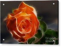 Orange Rose 6220-fractal Acrylic Print by Gary Gingrich Galleries