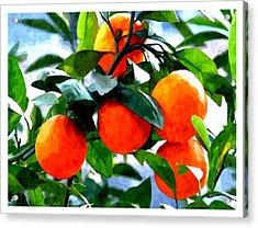 Orange Tree In Springtime  Acrylic Print by Lanjee Chee