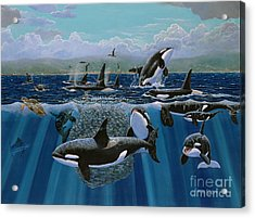 Orca Play Re009 Acrylic Print by Carey Chen