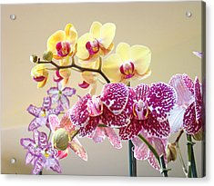 Orchid Art Prints Orchids Flowers Floral Bouquets Acrylic Print by Baslee Troutman