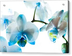 Orchid Closeup Acrylic Print by Boon Mee