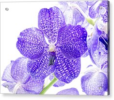 Orchid Flower Acrylic Print by Boon Mee