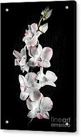 Orchid Flowers On Black Acrylic Print by Elena Elisseeva