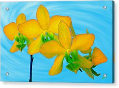 Orchid In Yellow Acrylic Print by Ben and Raisa Gertsberg