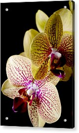 Orchid Acrylic Print by Ivete Basso Photography