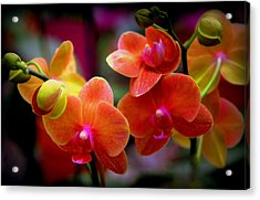 Orchid Melody Acrylic Print by Karen Wiles