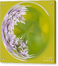 Orchid Moon Acrylic Print by Anne Gilbert