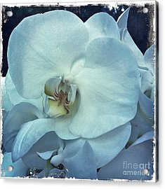 Orchid Acrylic Print by Nina Prommer