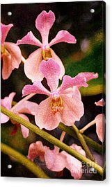 Orchid Number 17 Acrylic Print by Floyd Menezes