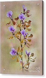 Orchid Organza Acrylic Print by Jacky Parker