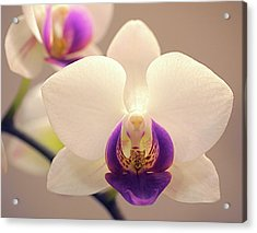 Orchid Acrylic Print by Rona Black