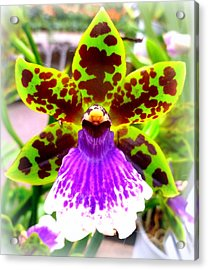 Orchid Acrylic Print by The Creative Minds Art and Photography
