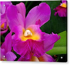 Orchid Variations 1 Acrylic Print by Rona Black