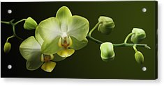 Orchids Acrylic Print by Marc Huebner