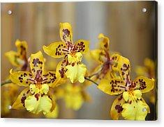 Orchids - Us Botanic Garden - 011345 Acrylic Print by DC Photographer