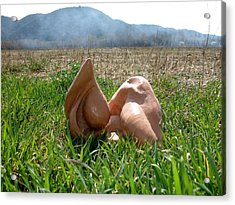 Organic 1 Acrylic Print by Flow Fitzgerald