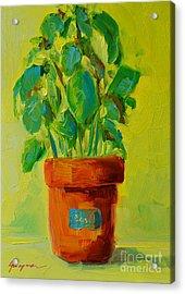 Organic Basil Plant Still Life Acrylic Print by Patricia Awapara