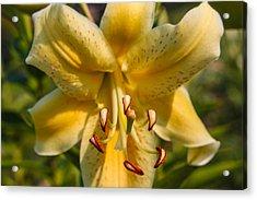 Oriental Lily Acrylic Print by Omaste Witkowski