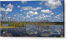 Orlando Wetlands Cloudscape 3 Acrylic Print by Mike Reid