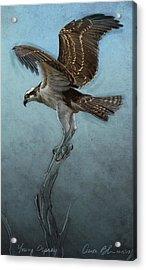 Osprey Acrylic Print by Aaron Blaise
