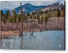 Osprey Nest In A Beaver Pond Acrylic Print by Omaste Witkowski