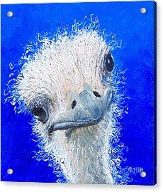 Ostrich Painting 'waldo' By Jan Matson Acrylic Print by Jan Matson