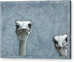 Ostriches Acrylic Print by James W Johnson