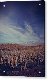 Our Day Will Come Acrylic Print by Laurie Search