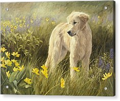 Out In The Field Acrylic Print by Lucie Bilodeau