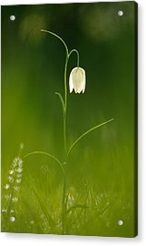 Out Of The Green Acrylic Print by Roeselien Raimond