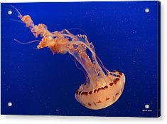 Out Of This World - Jellyfish Acrylic Print by Angela A Stanton