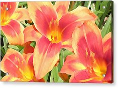 Outrageous Lilies Acrylic Print by Jean Hall