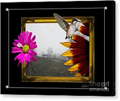 Outside The Box Acrylic Print by Cris Hayes