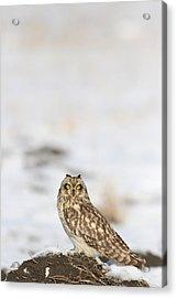 owl Acrylic Print by Dragomir Felix-bogdan