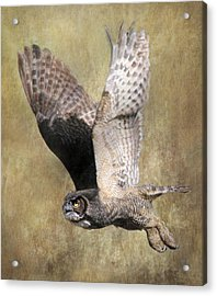 Owl In Flight Acrylic Print by Angie Vogel