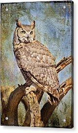 Owl On A Tree Acrylic Print by Barbara Manis
