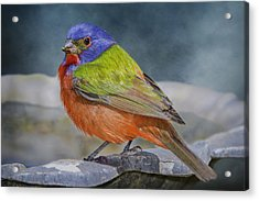 Painted Bunting In April Acrylic Print by Bonnie Barry