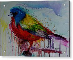 Painted Bunting Acrylic Print by Isabel Salvador