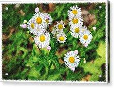 Painted Fleabane Acrylic Print by John Haldane