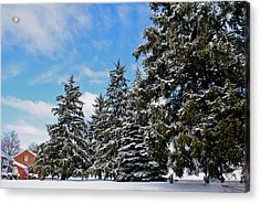 Painted Pines Acrylic Print by Frozen in Time Fine Art Photography