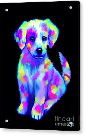 Painted Pup 2 Acrylic Print by Nick Gustafson