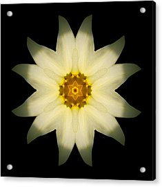 Pale Yellow Daffodil Flower Mandala Acrylic Print by David J Bookbinder