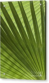 Palm Abstract Acrylic Print by Patty Colabuono