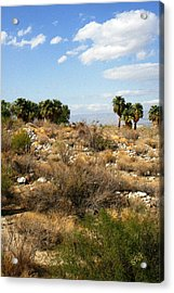 Palm Springs Indian Canyons View  Acrylic Print by Ben and Raisa Gertsberg