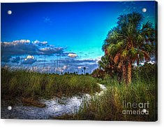 Palm Trail Acrylic Print by Marvin Spates