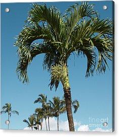 Palm Trees And Blue Sky Acrylic Print by Sharon Mau