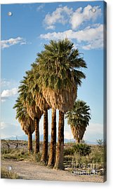 Palm Trees Acrylic Print by Jane Rix