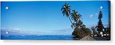 Palm Trees On The Coast, Lahaina, Maui Acrylic Print by Panoramic Images