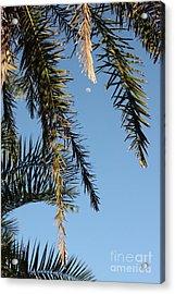Palms In The Wind Acrylic Print by AR Annahita