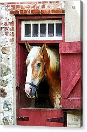 Palomino By Barn Door Acrylic Print by Susan Savad